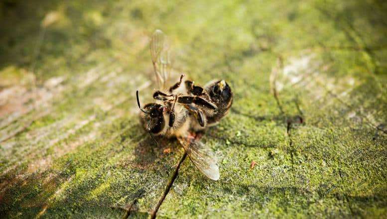 Pestizide bedrohen Artenvielfalt