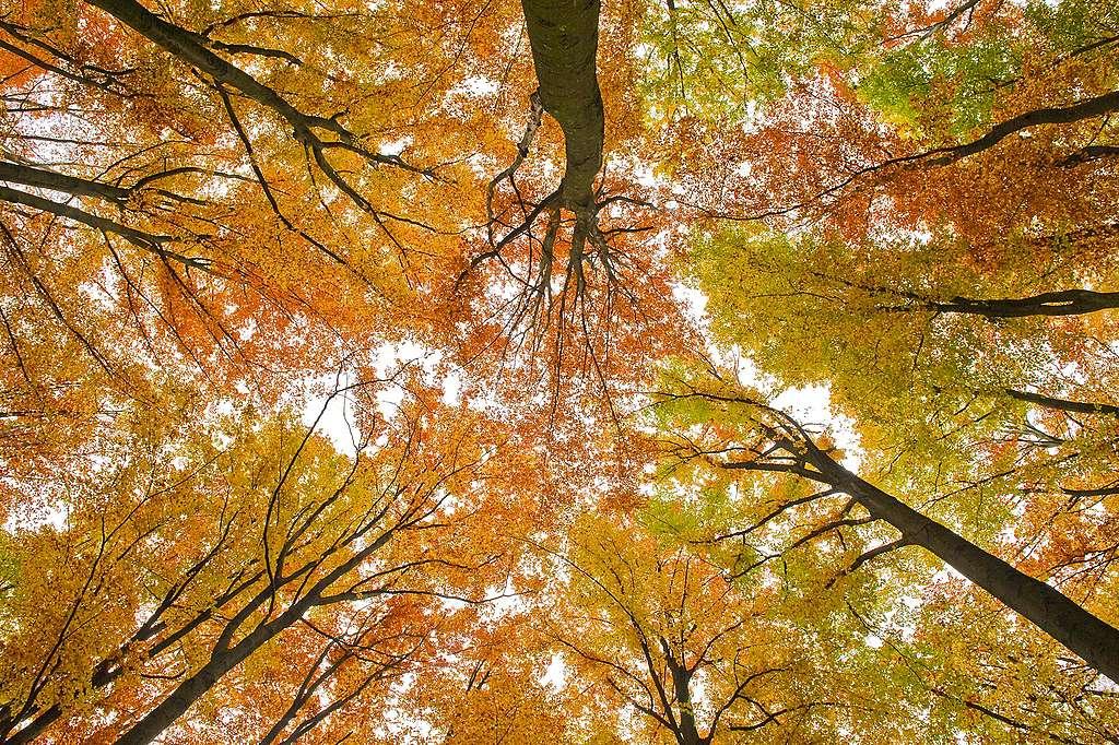 «Qui plante des arbres gagnera le ciel.»
