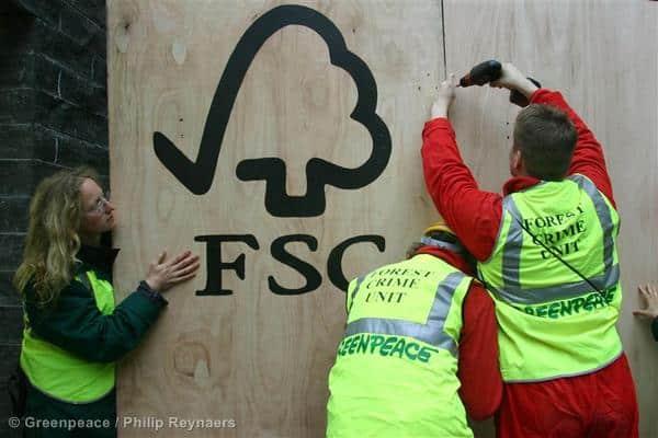 FSC im Kongobecken  – weiterhin keine Garantie für nachhaltiges Holz