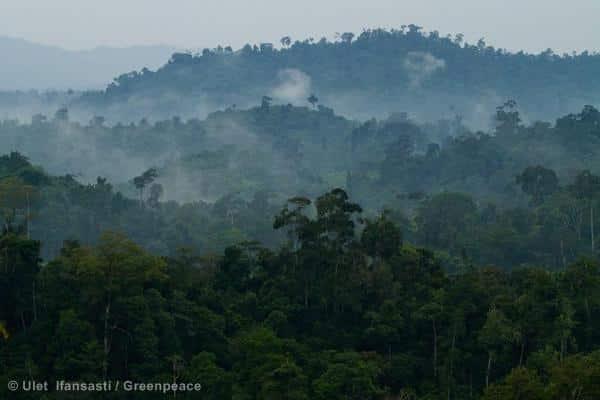 Asiens grösster Papierhersteller stoppt Rodung des indonesischen Regenwaldes