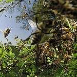 Eine Million Arten auf der Intensivstation