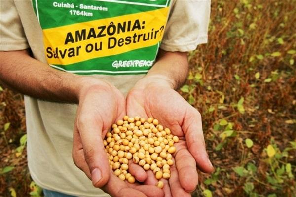 Victoire pour l'Amazonie: un moratoire permanent sur le soja