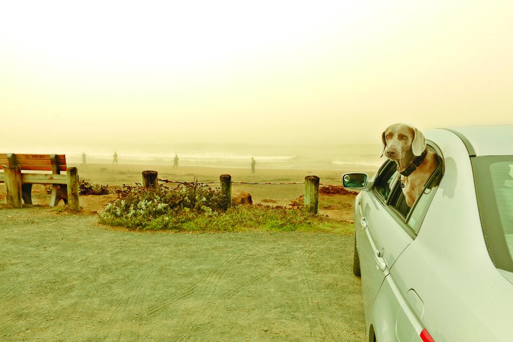 Das Naturgefühl verinnerlichen: für viele Kalifornier ein Erlebnis aus dem Auto heraus.