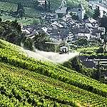 Nouvelle étude de Greenpeace: Greenpeace trouve des pesticides dans la vigne et le vin suisses