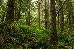 Great Bear Rainforest in B.C.