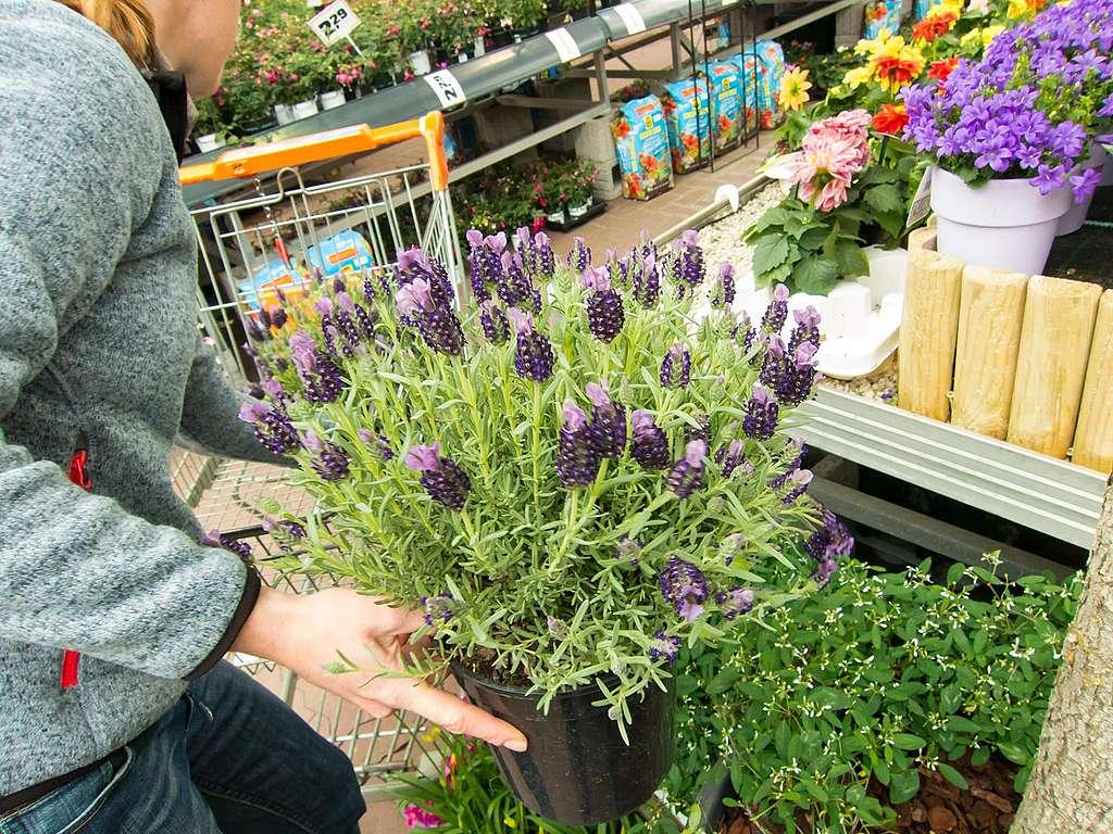 Pestizide im Blumenbeet