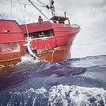 Haie unter Attacke