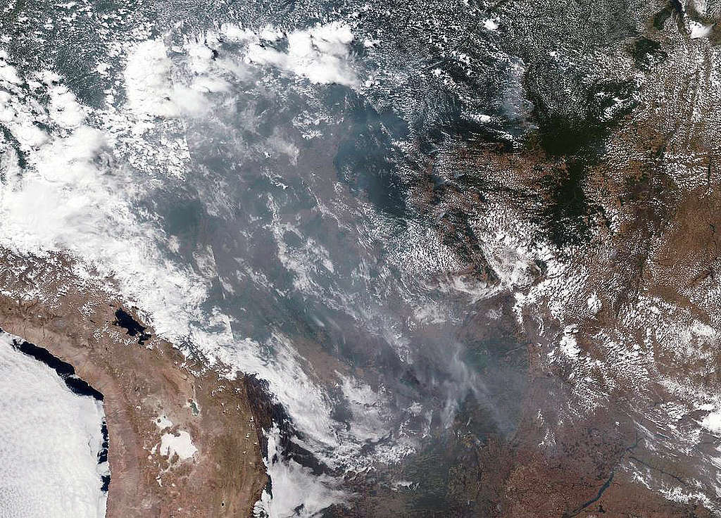 Greenpeace-Reaktion auf die Amazonas-Waldbrände