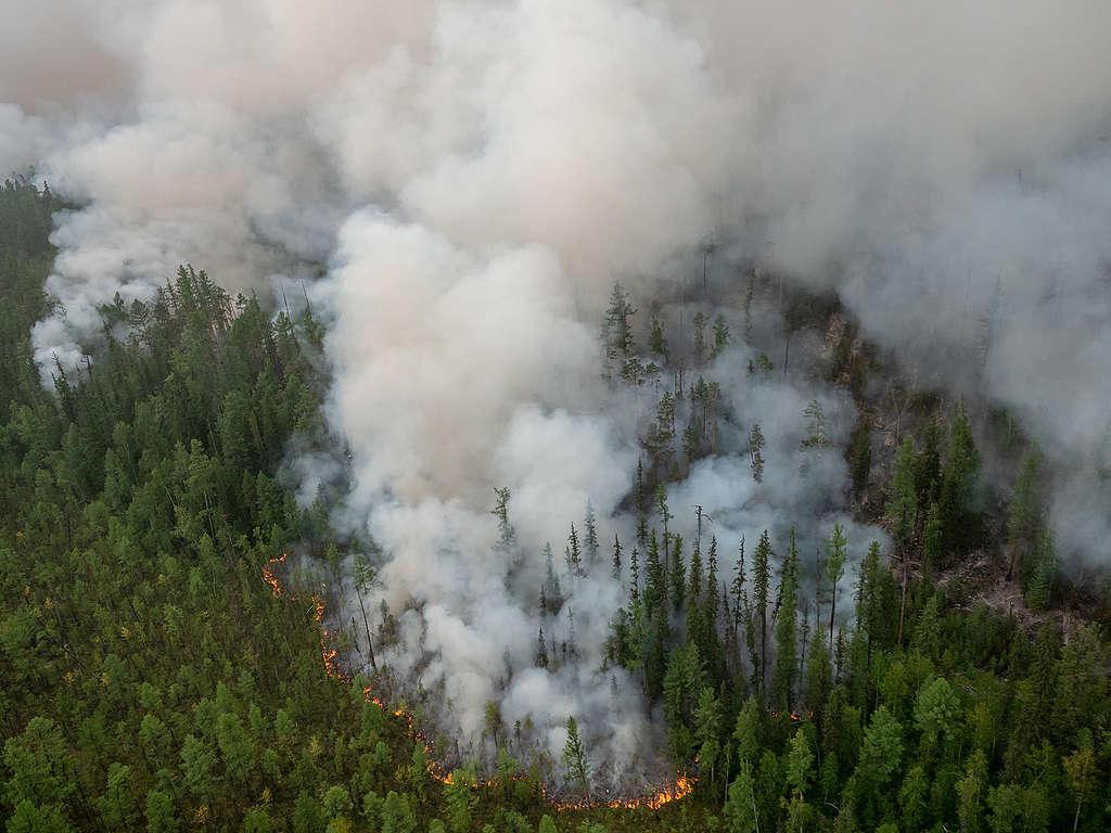 Globale Wälder stehen in Flammen: G7 müssen Klimaschutz vorantreiben