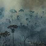 Le GIEC va dénoncer la terrible réalité de la déforestation et de la production de viande