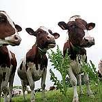 Une vision : une agriculture et une alimentation saine en Suisse