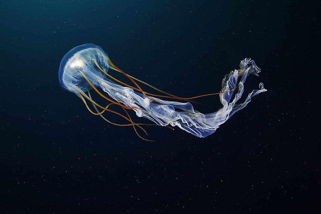 Les océans à l'origine de la vie sur Terre ?