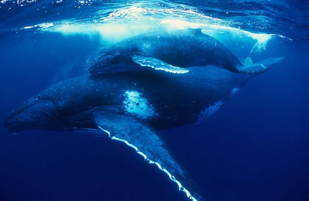 Océans, climat: même combat