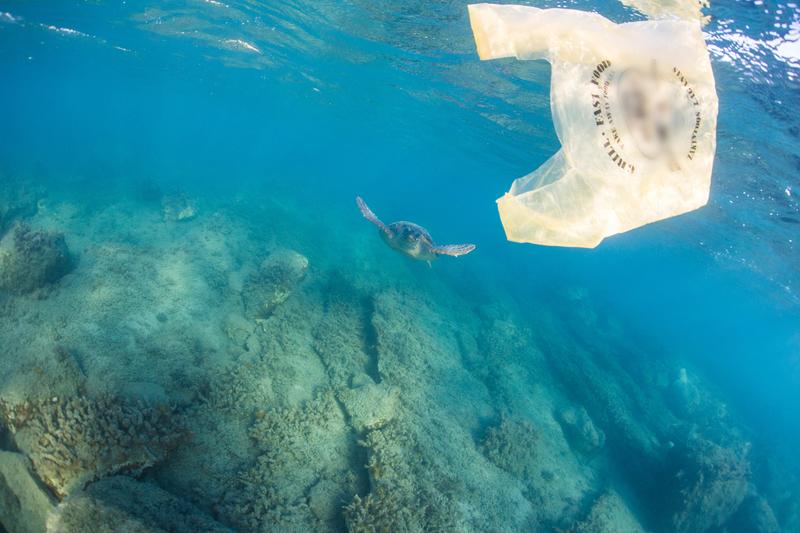 Plastiksäcke ersticken Natur