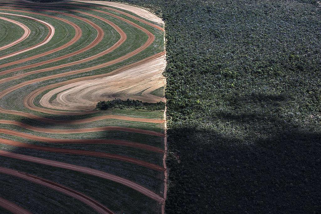 Hamburger-Zutat Gewalt und Abholzung