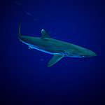 Protéger au moins 30% des océans: Greenpeace interpelle la Confédération