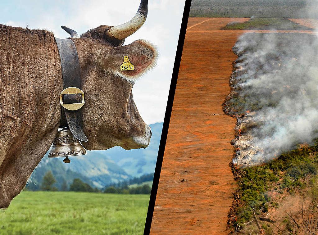 E-Talk zu Futtermittel: Wie hängen Amazonas, Schweizer Viehhaltung und Trinkwasserqualität zusammen?