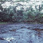 Les banques suisses financent le pétrole controversé d'Amazonie