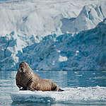 Cap sur l'Arctique