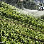Meine Gemeinde und Pestizide