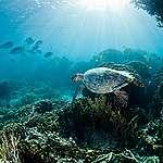 全球海洋保護區:2030 年實現保護 30% 海洋