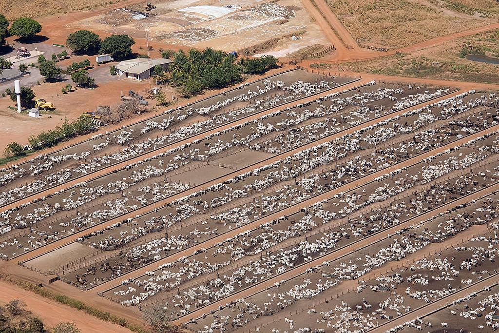 人類為了飼養牲畜,大規模砍伐林地,據統計全球80%的毀林是為了農牧業生產。