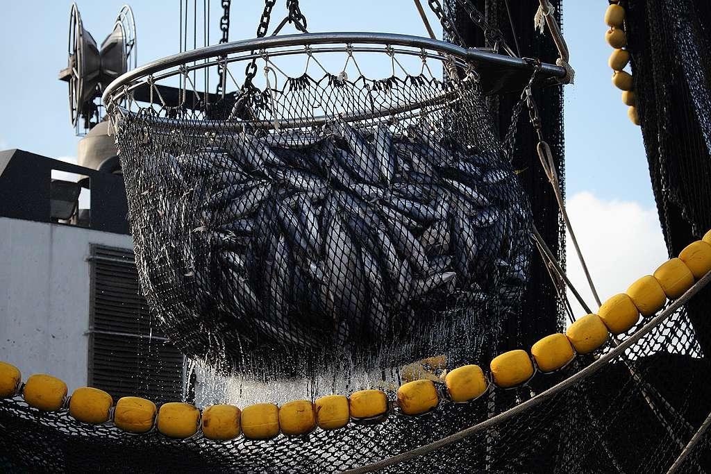法國圍網漁船特雷維尼奧(Trevignon)在莫三比克海峽,用人工集魚器拖曳鰹魚與和黃鰭鮪魚。