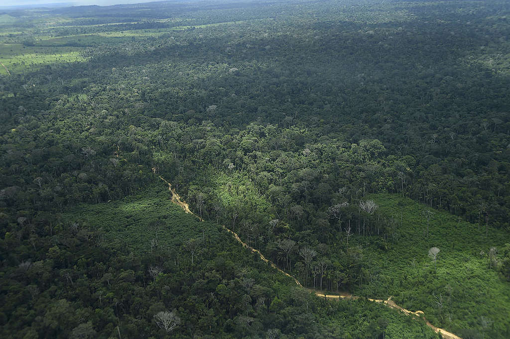 巴西亞馬遜的大片森林。