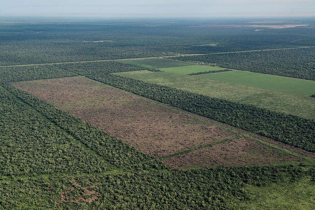 Gran Chaco森林孕育豐富生態:3,400種植物、500種鳥類、150種哺乳類、120種爬蟲類、100種兩棲動物,同時也是原住民的家。