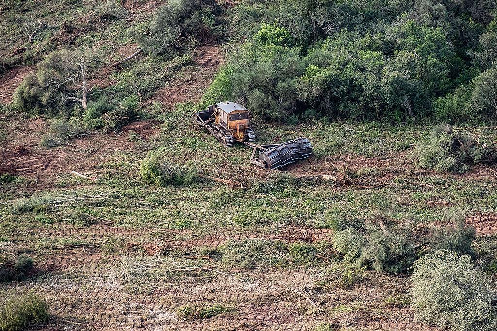在過去30年,密集的畜牧與農業,讓阿根廷已失去800萬公頃(超過2個臺灣面積)的森林,並加劇氣候變遷和水患。(此照片攝於2020年1月30日)