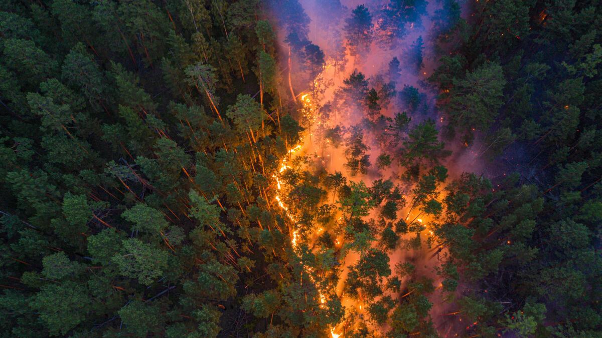 今年6月,西伯利亞發生嚴重大火,超過1,000萬公頃針葉林等森林陷入火海。此照片為綠色和平俄羅斯調查團隊,於7月21日前往現場空拍紀錄大火實況。