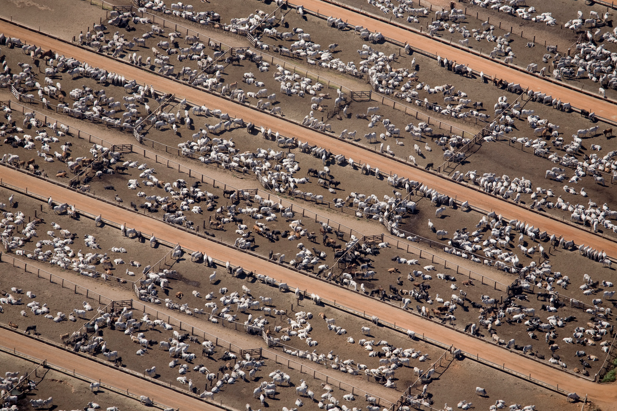 為了畜養大量牛隻,工業化牧農場占地非常廣大,卻也因此付出極高的環境代價。