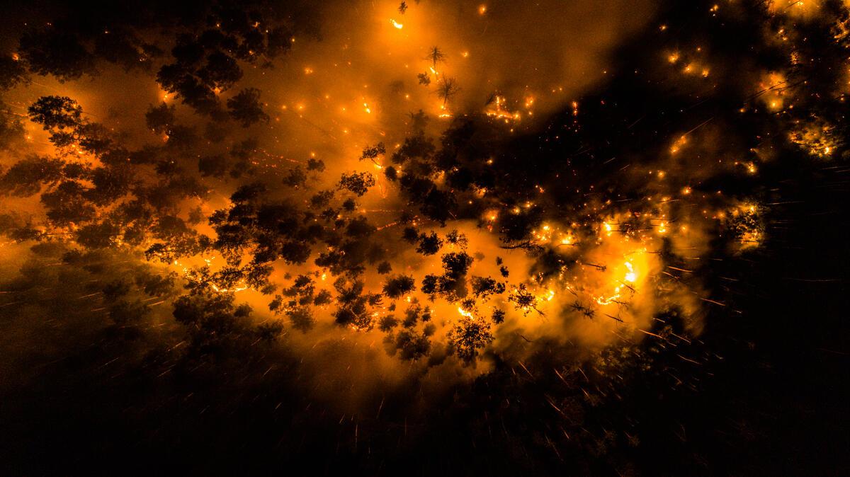 根據綠色和平專案團隊觀察,西伯利亞大火的部分主因是閃電與乾燥、炎熱氣候造成,但有許多成因是大規模的計劃性焚林,導致無法控制的火災。