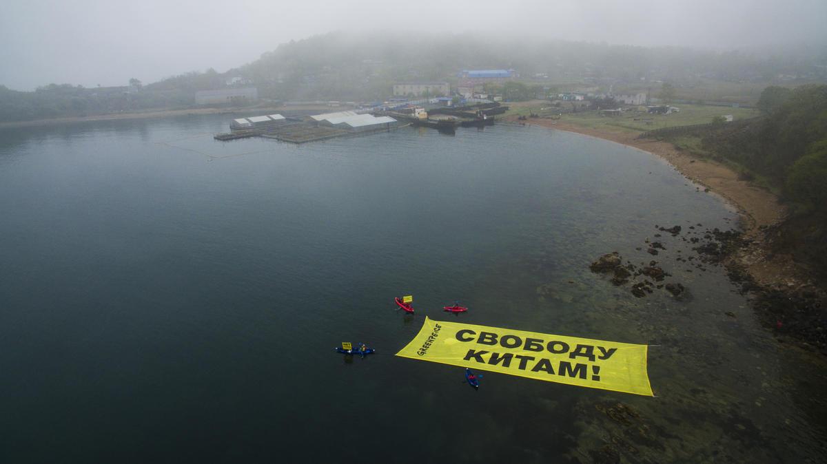 2019年5月,綠色和平行動者於俄羅斯「鯨豚監獄」附近海域展示巨型布條,倡議「放了鯨魚吧!」獲得媒體廣泛報導。
