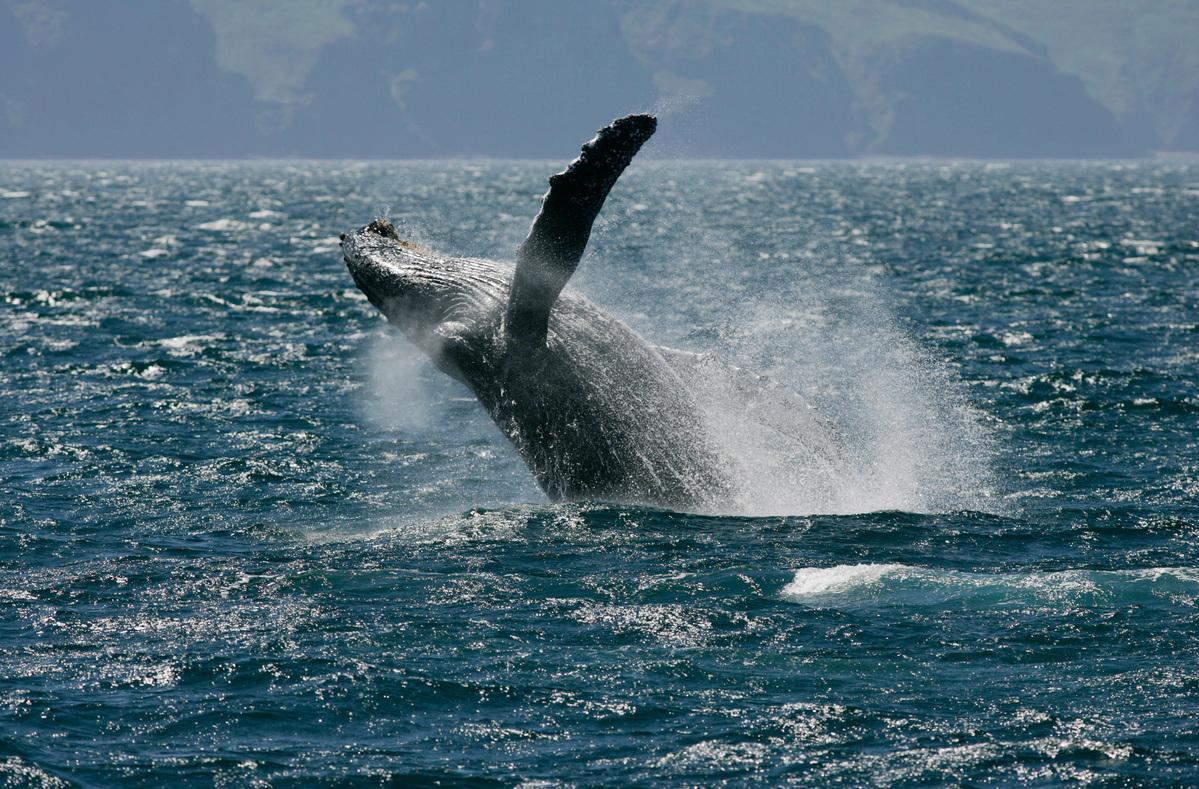 生物多樣性有助於環境健康,但當環境長期遭受破壞,也會造成生物多樣性喪失。例如鯨魚有助於維持海洋健康,更能幫助減緩氣候變遷,但牠們的棲地一直被人類侵擾和污染。