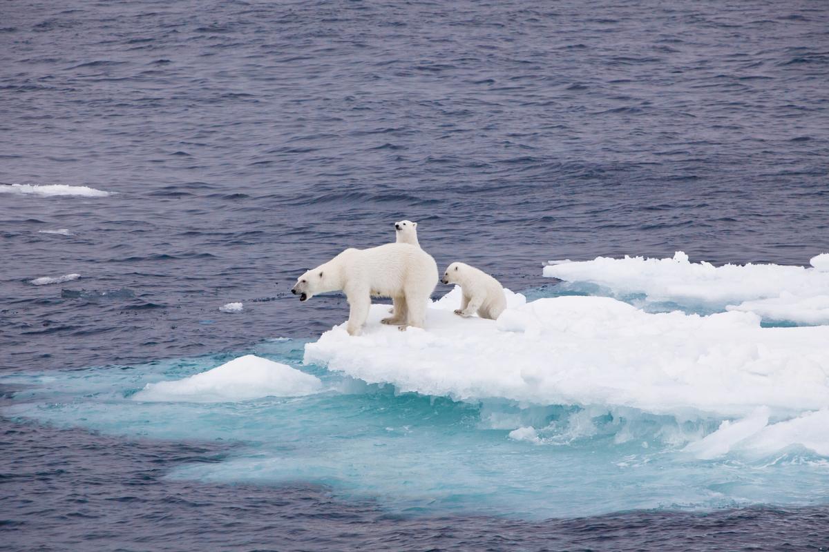 足夠的海冰對北極熊來說,是生存的必要環境,但海冰的消融影響的遠不止於極地動物,更助長氣候變遷,危及您我的安全。