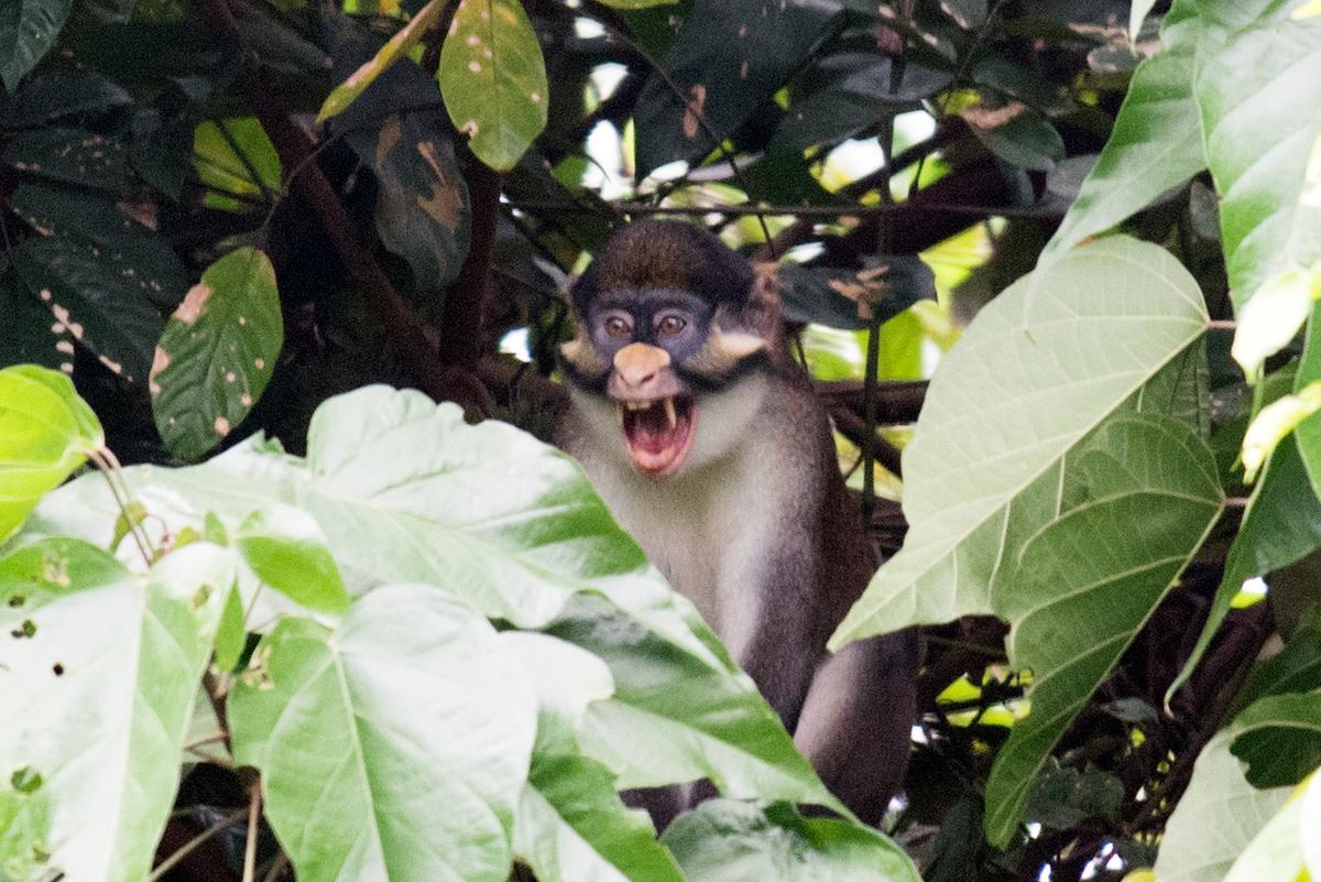 受保護的沼澤地是紅尾猴(Red-tailed Monkey)的重要棲息地。