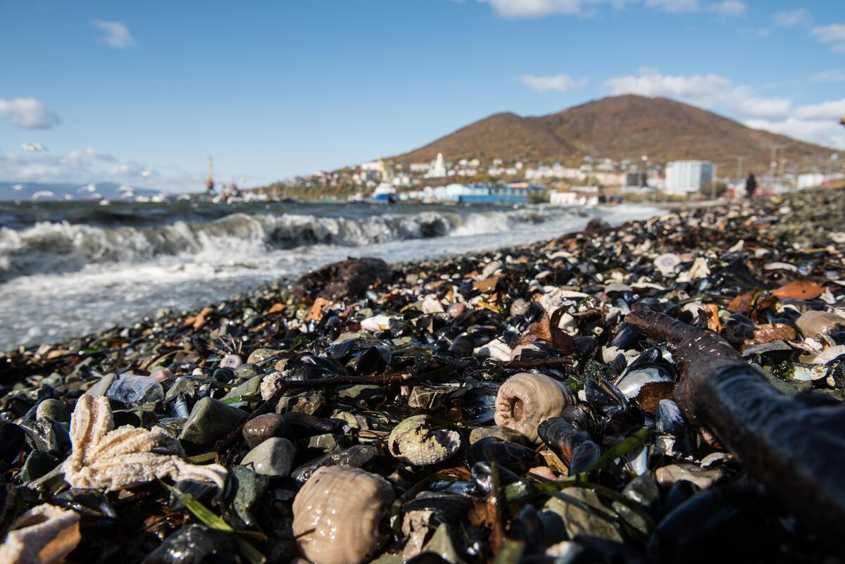 大量動物被沖刷至堪察加半島海灘上,包括海膽、海星、螃蟹等海洋生物,致死原因可能與海中的不知名有毒物質有關。