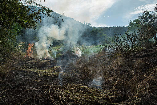 Open Burning in Saraburi Province. © Jorge Lareau / Greenpeace