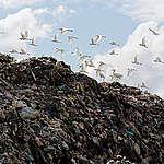 พลาสติก ผลกระทบ และการเปลี่ยนแปลง