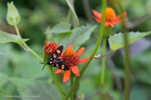 Insect-Butterfly