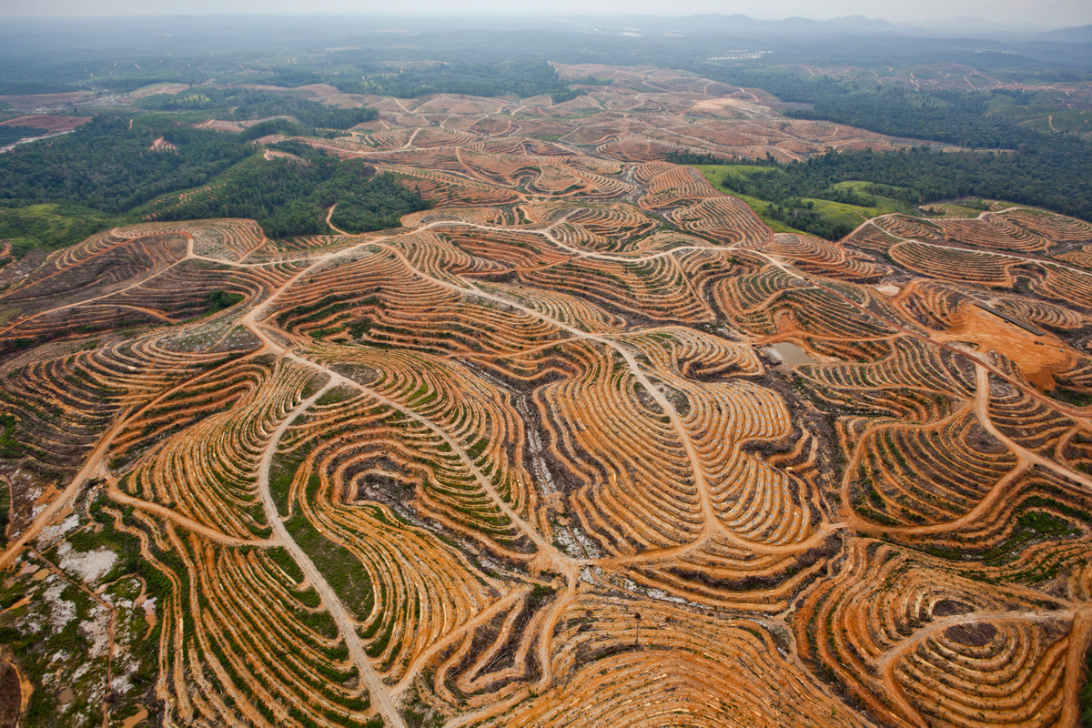 Deforestation in Central Kalimantan. © Ulet  Ifansasti / Greenpeace