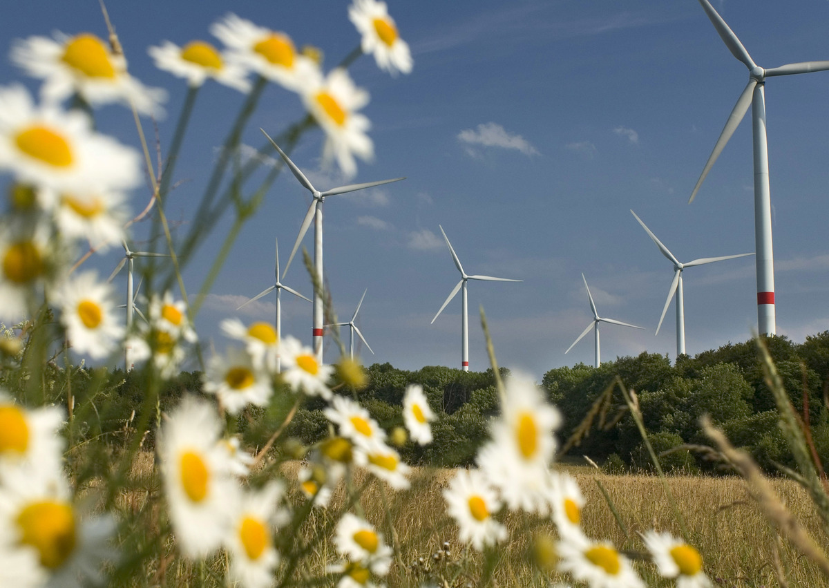 Wind Farm in Germany. © Paul Langrock / Greenpeace