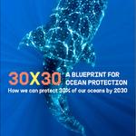 30×30 แผนการปกป้องมหาสมุทรโลก