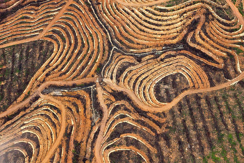 Palm Oil Production in Kalimantan. © Daniel Beltrá / Greenpeace