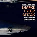 ฉลาม นักล่าผู้ตกเป็นเหยื่อ (Shark Under Attacked)