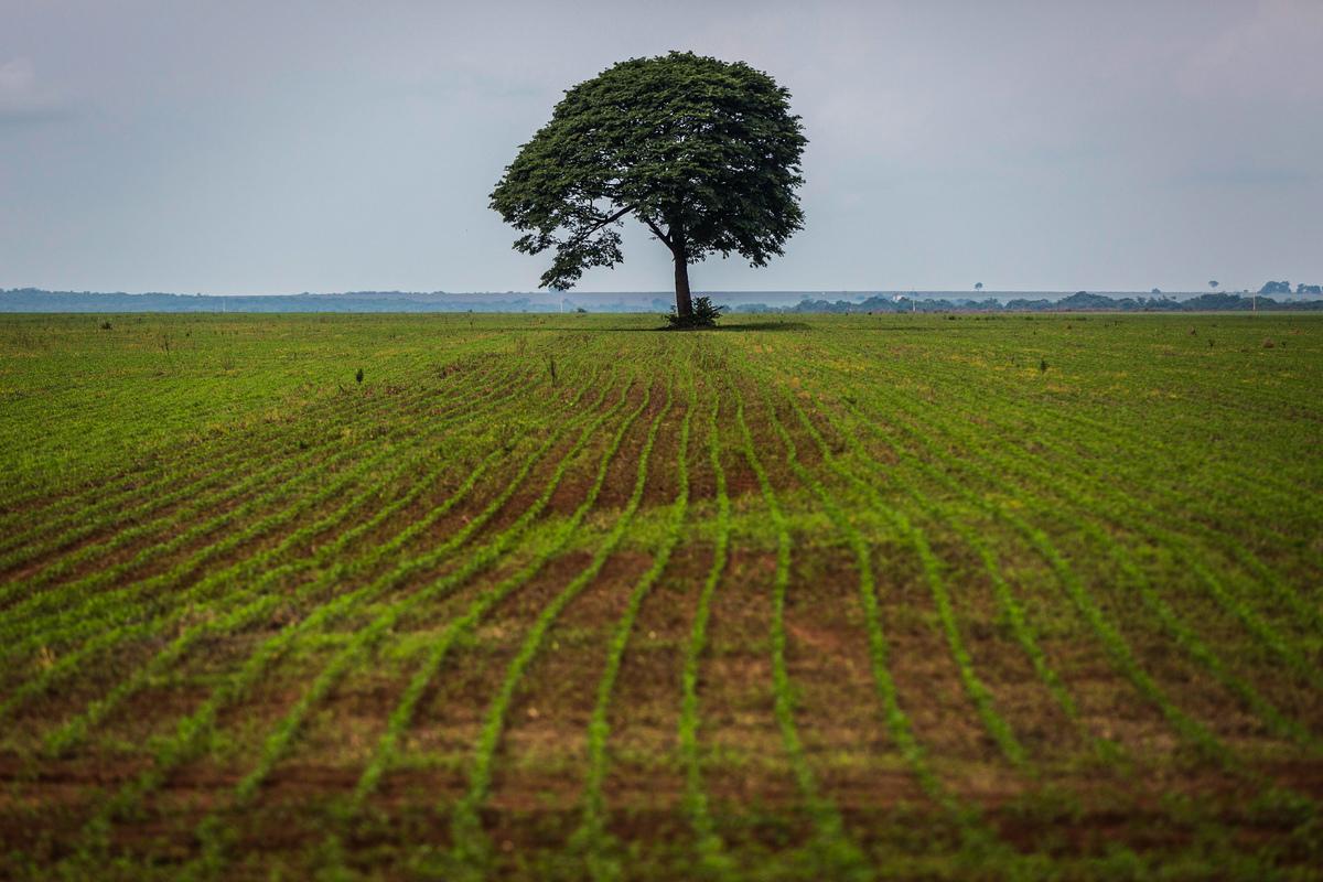 Soya Plantation in the Amazon. © Bruno Kelly / Greenpeace