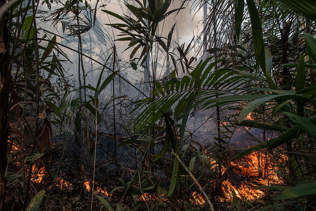 Amazon Burnt Area in Porto Velho, Rondônia, Amazon (2019). © Victor Moriyama / Greenpeace