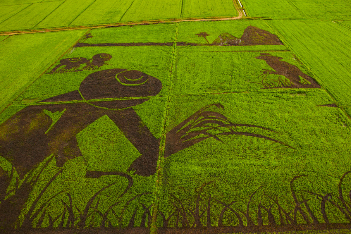 Organic Rice Art at Ratchaburi in Thailand. © Greenpeace / Athit Perawongmetha