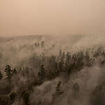 Forest Fires Investigation in PT GAL, Central Kalimantan. © Alif Rizky / Greenpeace